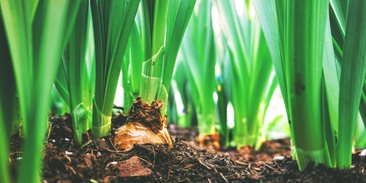 First Steps In Your Agricultural Business – Writing A Proposal